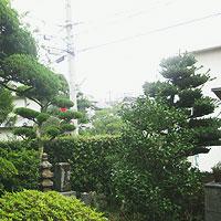 大阪府茨木市での剪定前画像その2