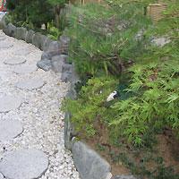 大阪門真市での植栽後画像
