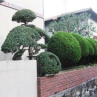 兵庫県川西市での剪定後画像